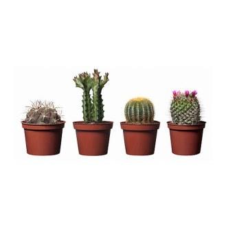 cactaceae-plante-en-pot__0121017_PE277830_S4